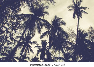 Vintage toned picture of palms silhouettes under sky.
