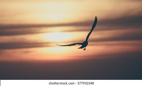Vintage toned silhouette gull on sunset background