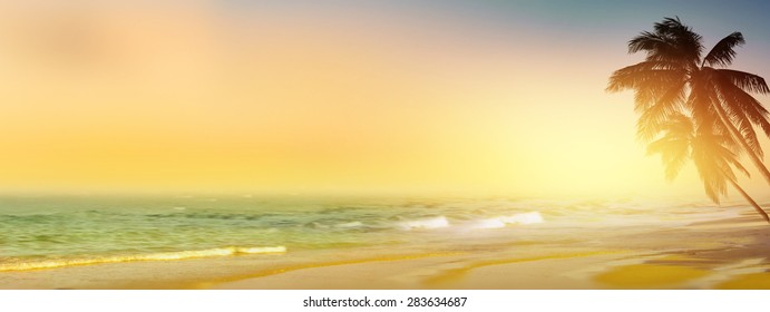 Vintage tropical beach background. Coconut palm tree at sunrise. Panoramic view.