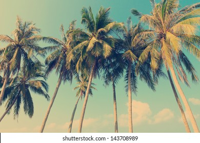 Vintage tropical palm trees