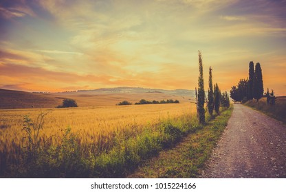 Vintage tuscan landscape with fields of corn and hills in the background