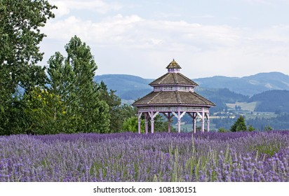 A vintage Victorian white gazebo surrounded by lavender flowers