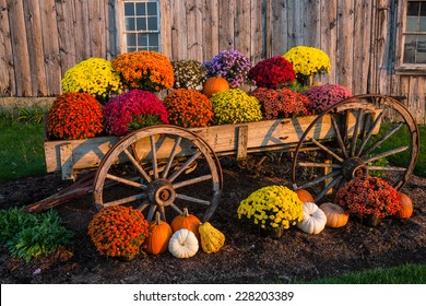 Vintage wagon with colorful flowers against old weathered barn.