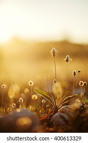 vintage wild meadow plants in spring field in morning on natural yellow orange sunny background. Outdoor fresh photo