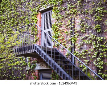 Vintage window and stair with creeping ivy plant on the brick wall