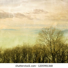 Vintage winter landscape with bare trees and cloudy sky. Nature background.