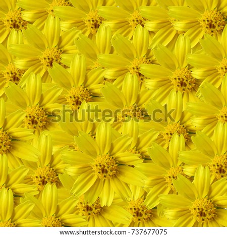 Vintage Yellow Daisy Wallpaper