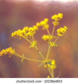 Vintage yellow meadow flowers. Nature view