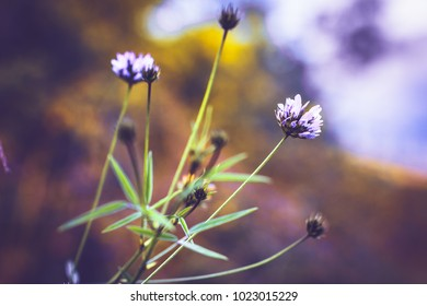 Vintahe lilac flowers. Nature macro photo