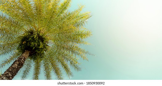 Vintge style of palm tree on clear beautiful summer sky tropical background with copy space.