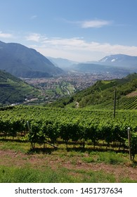 Vinyard in foreground with valley and mountains in background. Partly cloudy sky