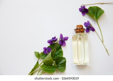 Viola odorata oil (Sweet Violet, English Violet, Common Violet, or Garden Violet) with fresh Viola odorata flowers.