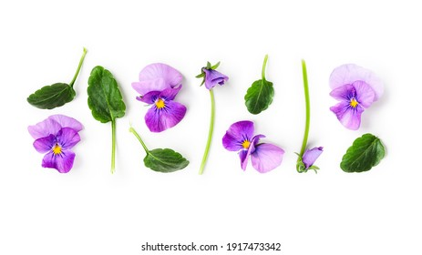 Viola pansy flower creative banner and pattern. Purple spring flowers composition isolated on white background. Floral arrangement, design element. Springtime concept. Top view, flat lay