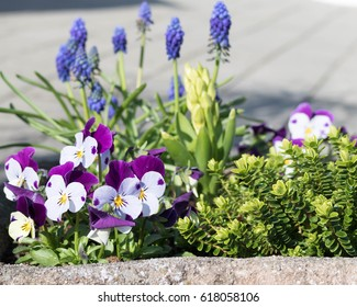 violas and hyacinths in the Austrian Alps in a flower basket
