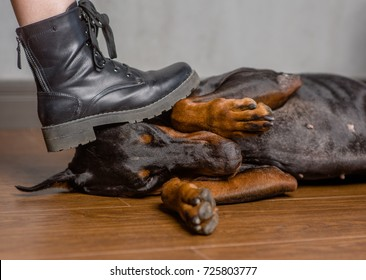 violence against animals. man presses his foot on the dog's head