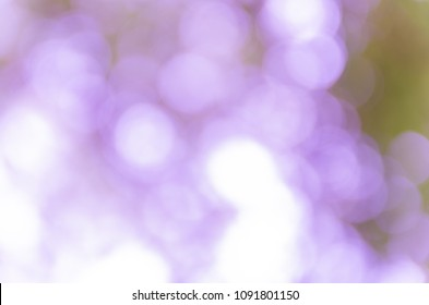 Violet abstract bokeh background from nature environment