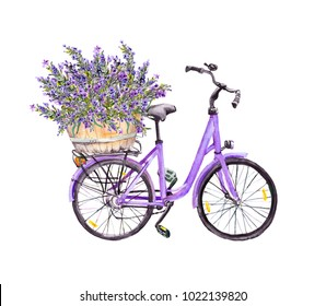 Violet bicycle with lavender flowers bouquet in basket. Watercolor