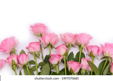 Violet blooming fresh roses row close up isolated on white background