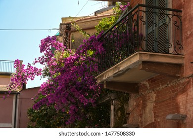 Violet climber on a balcony in an Italian old town, blue sky, selected focus