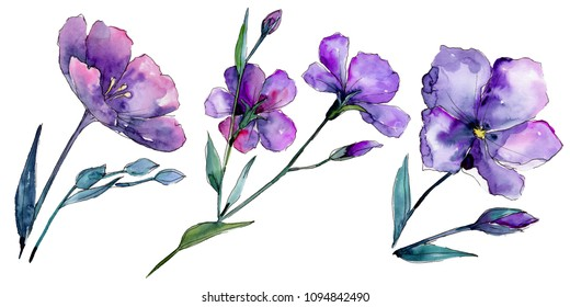 Violet flax. Floral botanical flower. Wild spring leaf wildflower isolated. Aquarelle wildflower for background, texture, wrapper pattern, frame or border.