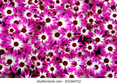 violet flower background