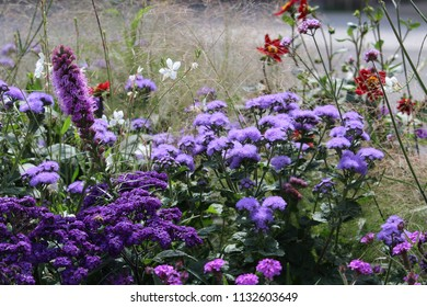 violet flower, flower, floral wallpaper, floral, nature