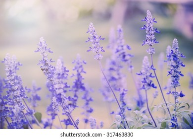 Violet flower in the garden ,floral background. Filter:cross process effect.