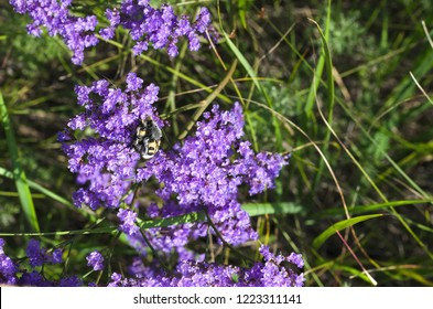 Violet Flower head with a bug on the summer forest background.