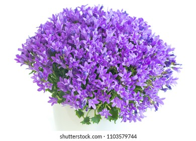 violet flower on the white background