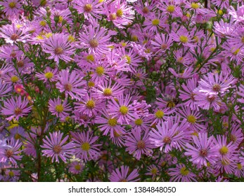 violet flowers with beens an green sheets