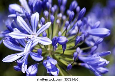 Violet Flowers Close-up