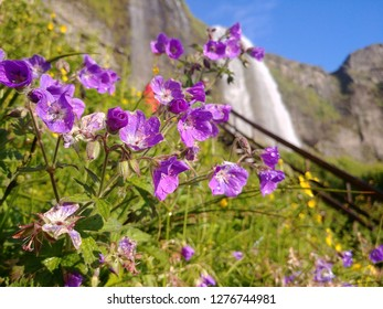 Violet flowers and skyfall in Iceland