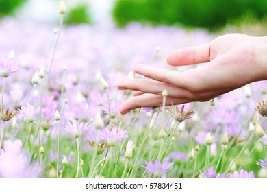 Violet flowers and the woman palm in the field