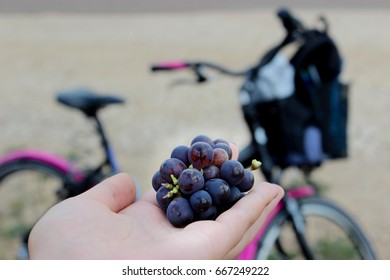 Violet grapes in a hand on a bike trip