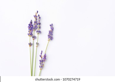violet lavender flowers arranged on white background. Top view, flat lay. Minimal concept. Dry flower floral composition. Pastel colors.