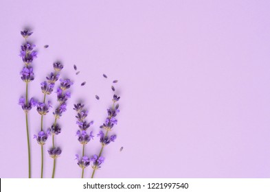 Violet lavender flowers arranged on bright purple background. Flat lay, top view.