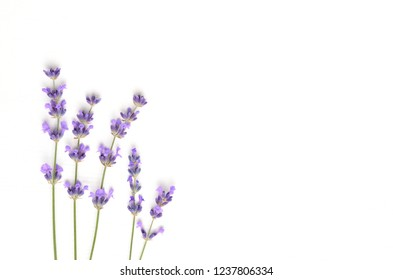 Violet lavender flowers arranged on white background. Flat lay, top view, copy space. Minimal concept.