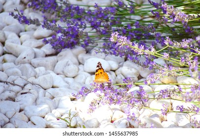 Violet lavender flowers close up. Lavender field in the village. Lavender flowers on the farm. Selective focus