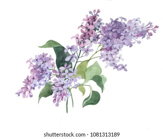 violet lilac branches watercolor isolated on white background illustration for greeting cards, paper, crockery