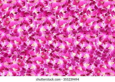 violet orchid flowers background