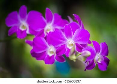 Violet orchids flower background
