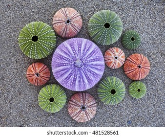 violet and other colorful sea urchins on wet sand beach