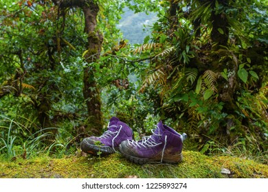 Violet trekking shoes on the nature. Nepal