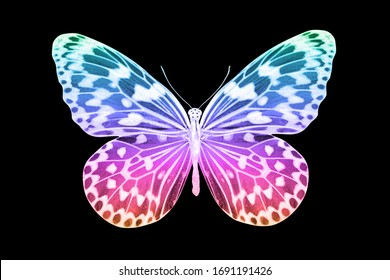 violet tropical color butterfly. isolated on black