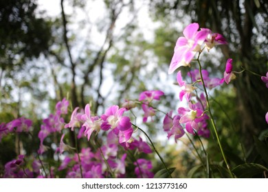 violet and white orchid