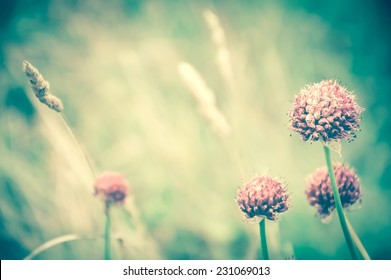 Violet wild flowers and golden spikes in the evening light at the meadow. Selective soft focus on the closest flower. Retro aged photo.