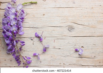 Violet wisteria flowers on white wooden background. Top view with copy space.