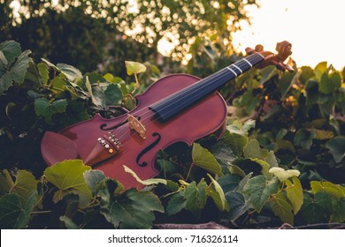 A violin atop grapevines with the sun in the background