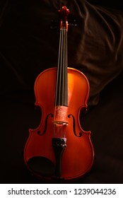 Violin instrument in sunlight isolated.