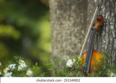 Violin leaning on a sweet gum tree in a bed of gardenias. Macon, Georgia